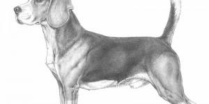 Beagle5