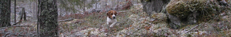 Västerbottens Beagleklubb